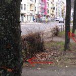 Der Täter arbeitet sich von Baum zu Baum vor